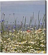 Poppies Et Al V Canvas Print