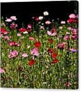 Poppies Gettin Sun Canvas Print