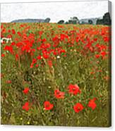 Poppies IIi Canvas Print