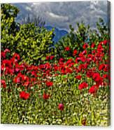 Poppies In Remembrance Canvas Print
