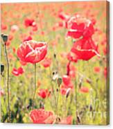 Poppies In Tuscany - Italy Canvas Print