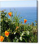 Poppies On The Pacific Canvas Print