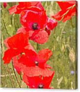 Poppies Vi Canvas Print