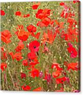 Poppies Vii Canvas Print