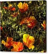 Poppies Will Make Them Sleep Canvas Print
