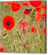 Poppies X Canvas Print