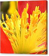 Poppy 3 Canvas Print