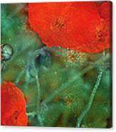 Poppy 30 Canvas Print