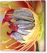 Poppy 4 Canvas Print