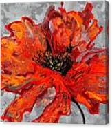 Poppy 41 Canvas Print