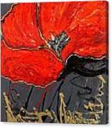 Poppy 43 Canvas Print