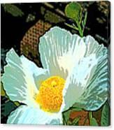 Poppy 5 Canvas Print
