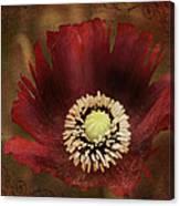 Poppy At Days End Canvas Print