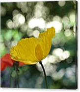 Poppy At The Discoteque Canvas Print