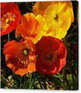 Poppy Bouquet Canvas Print