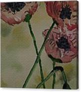 Poppy Breeze A Canvas Print