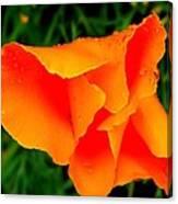 Poppy Dew Canvas Print