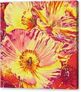 Poppy Extravaganza Canvas Print