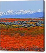 Poppy Fields Forever Canvas Print