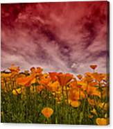 Poppy Fields Forever Canvas Print