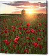 Poppy Fields Of Sweden Canvas Print