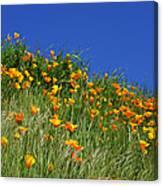 Poppy Flowers Landscape Art Prints Poppies Canvas Print
