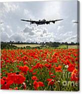 Poppy Fly Past Canvas Print