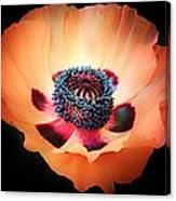 Poppy In The Darkness Canvas Print