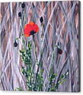 Poppy In The Wild Canvas Print