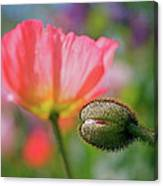 Poppy In Waiting Canvas Print