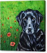 Poppy - Labrador Dog In Poppy Flower Field Canvas Print
