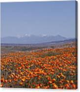 Poppy Land Canvas Print