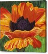 Poppy Number 2 Canvas Print