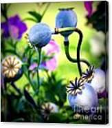Poppy Pods And Curvy Stems. Canvas Print