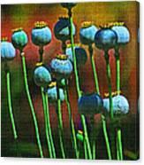 Poppy Seed Pods Canvas Print