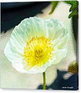 Poppy Series - Beside The Sidewalk Canvas Print