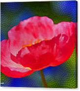 Poppy Series - Touch Canvas Print