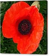 Poppy Of Remembrance  Canvas Print