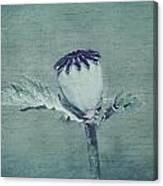 Poppy Still Life Canvas Print