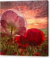 Poppy Sunrise Canvas Print