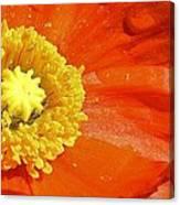 Poppy Up Close Canvas Print