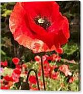 Poppy Watercolor Effect Canvas Print