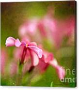 Popsicle Pink Canvas Print