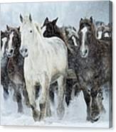Populations Of Horses Canvas Print
