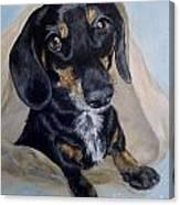 Dachshund Dog Canvas Print