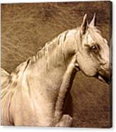 Portait Of A Stallion Canvas Print