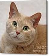 Portrait - Orange Tabby Cat Canvas Print
