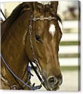 Portrait Of A Brown Horse Canvas Print