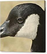 Portrait Of A Canadian Goose  Canvas Print