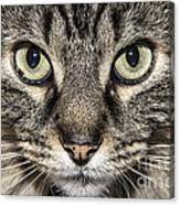 Portrait Of A Cat Canvas Print